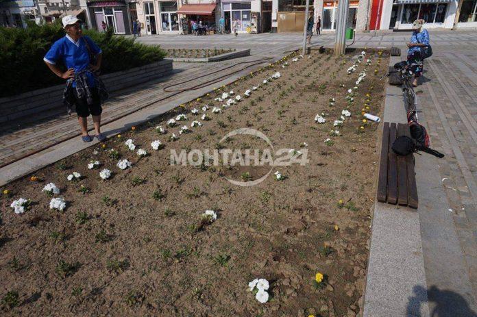 Алеите в Лом останаха без цветя