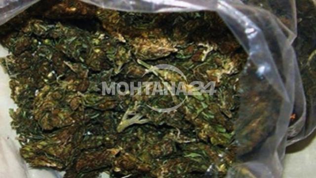 Над 3 килограма канабис открити в с. Владимирово