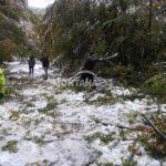 """Десетки паднали дървета блокират """"Петрохан"""""""