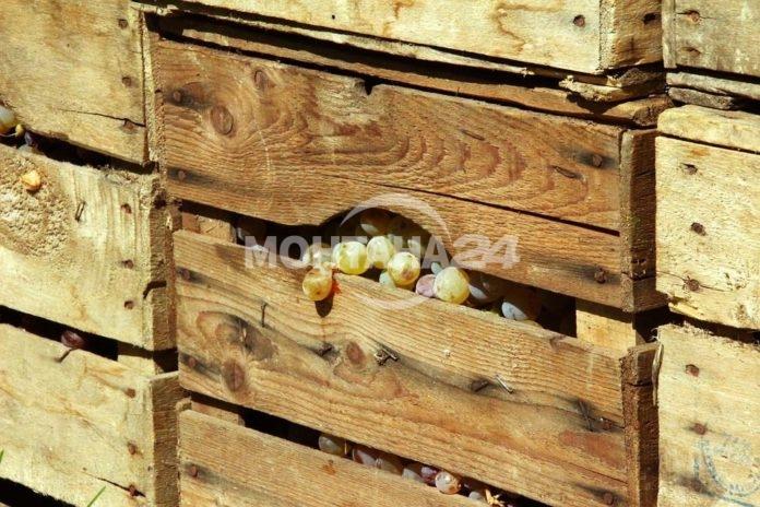 Смолянчани откраднаха два тона грозде