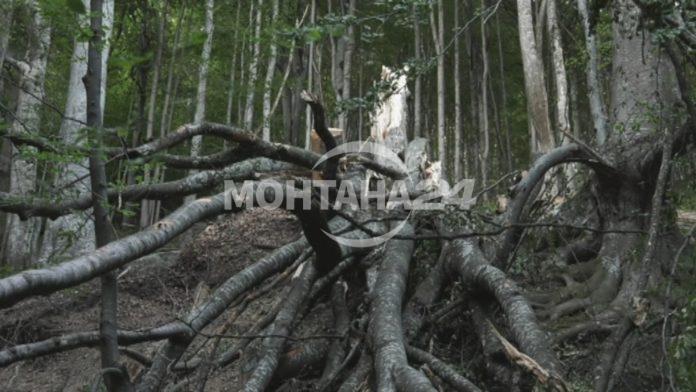Дървета са препречили пътя на прохода