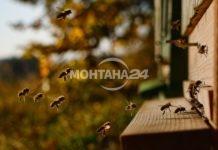 2.4 милиона лева държавна помощ за пчеларите