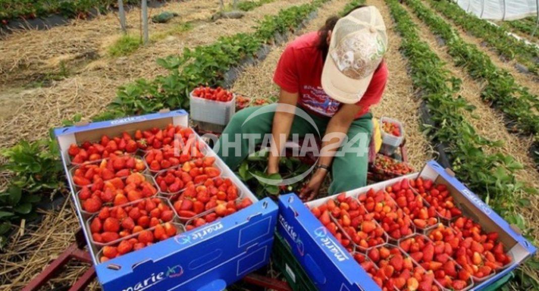 Обявиха свободните работни места в общината