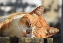 Изверг застреляха домашна котка в Брусарци