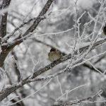 Облачно с мокър сняг в монтанско