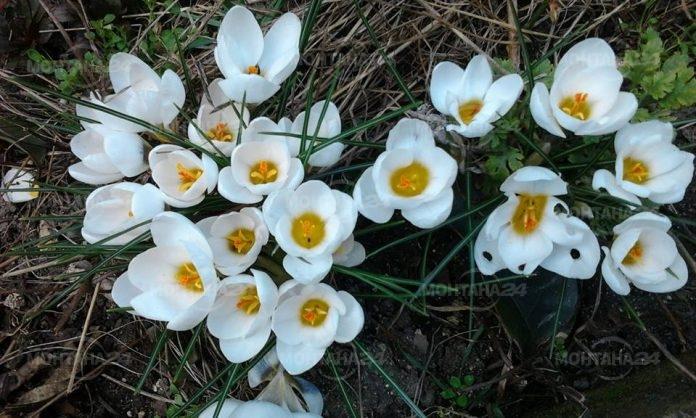 Крачка напред към пролетта във вторник