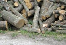Бракониери крият отсечени дървета в гробище