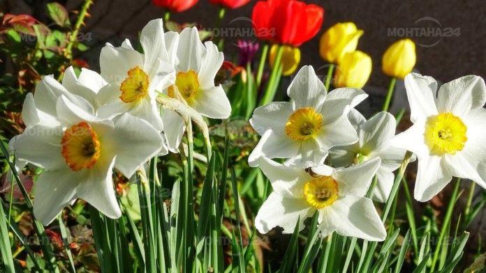 Близо 4000 монтанчани носят имена на цветя в общината