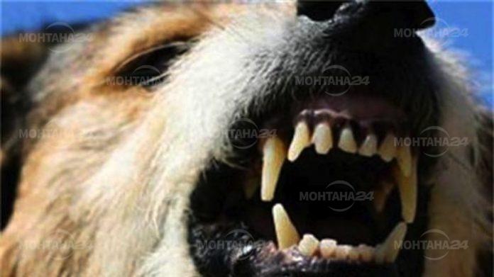 Възрастна жена почина след като беше нахапана от куче
