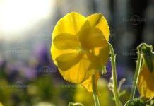 СТоплото и слънчево време продължава през новата седмица