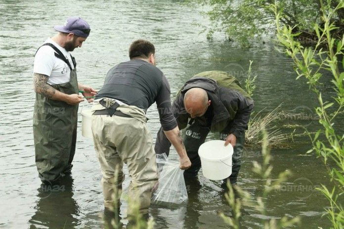 Докараха пъстърва от Родопите и я пуснаха в река Огоста