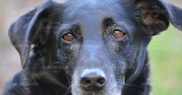Убиха три кучета с дървена дъска в Берковица