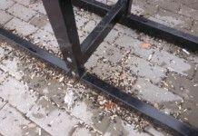 """Семки, фасове и боклуци загрозиха новия парк """"Огоста"""""""
