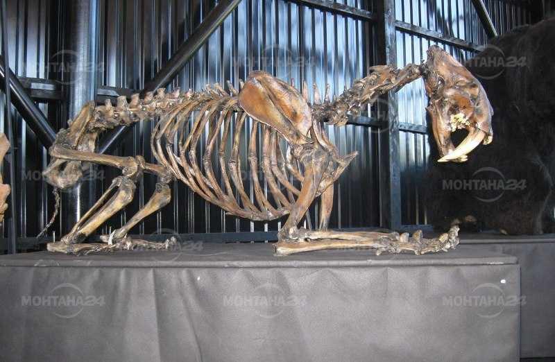 Палеопарк с експонати от древни животни ще правят във Вършец