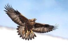 """""""Живот за птиците"""" с номинация за Европейските бизнес награди"""