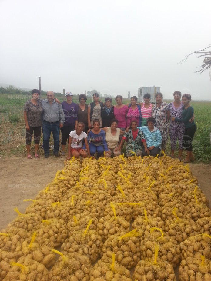 Роми произведоха и дариха 10 тона картофи