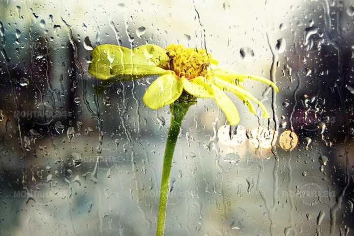 В следобедите часове ще започне да вали дъжд, който вечерта ще се усили. С него ще започне да прониква студен въздух.