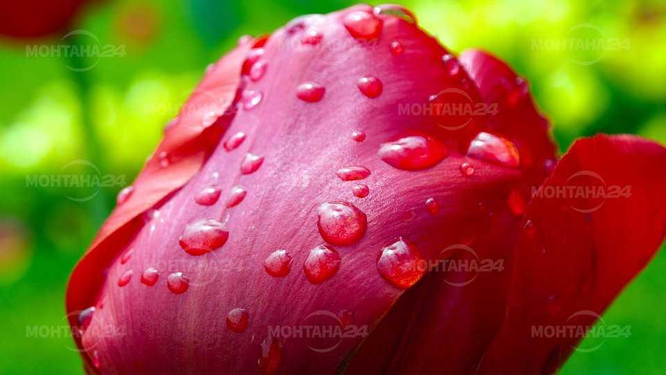 Дъжд в понеделник прогнозират синоптиците