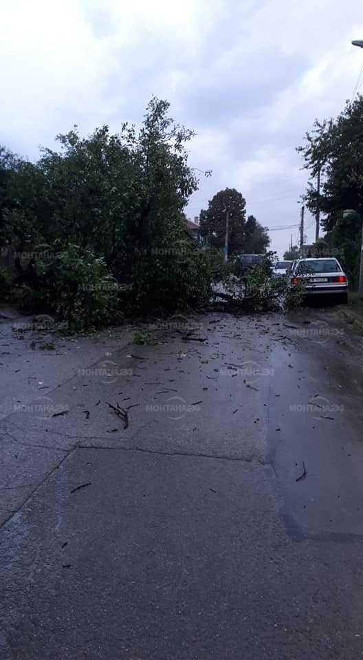 Дърво падна на оживена улица в Лом