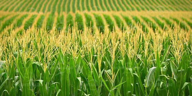 Земеделците в региона с големи задължения към държавата