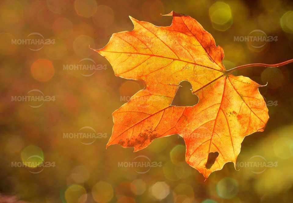 Астрономическата есен настъпи! От утре жълт код