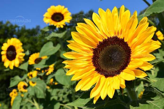 Слънчева и гореща неделя в региона