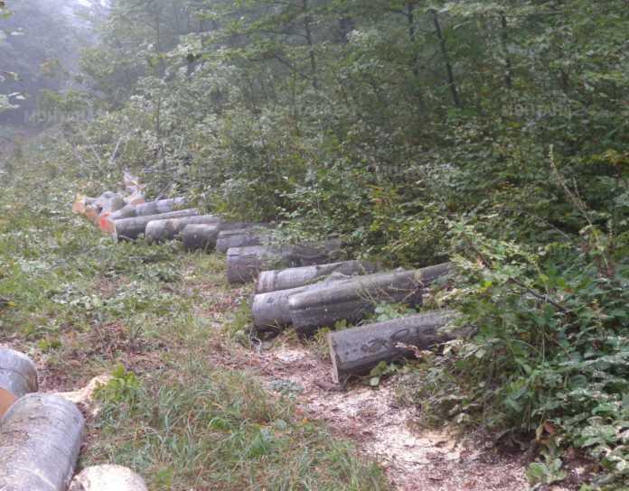 Ето кой унищожава гората край Вършец