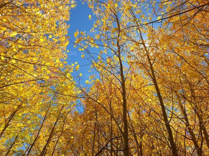 През деня над Монтана и региона хубавато есенно време ще продължи и ще преобладава слънчево време.