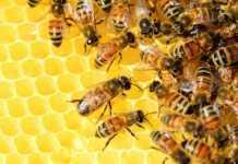 Важно за пчеларите! Запова приема на документи от Националната програма по пчеларство