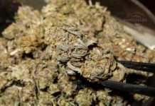 Полицията намери канабис в частен дом в Монтана