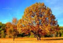 Топла есен над региона и в събота