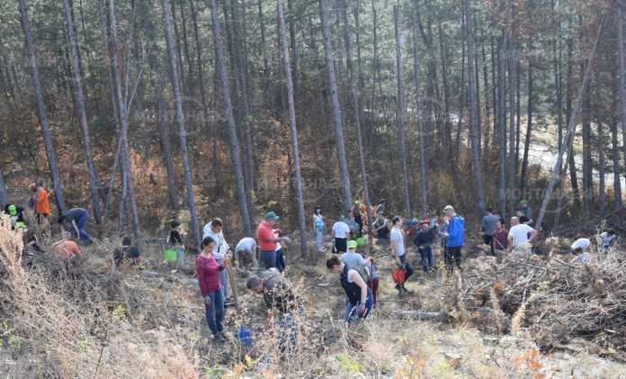 Доброволци от ЧЕЗ засадиха 2000 дървета