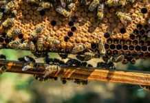 От 7 януари отварят отново Националната програма по пчеларство
