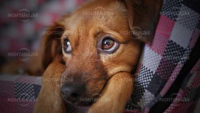 Убиха кучето на баба от Смирненски