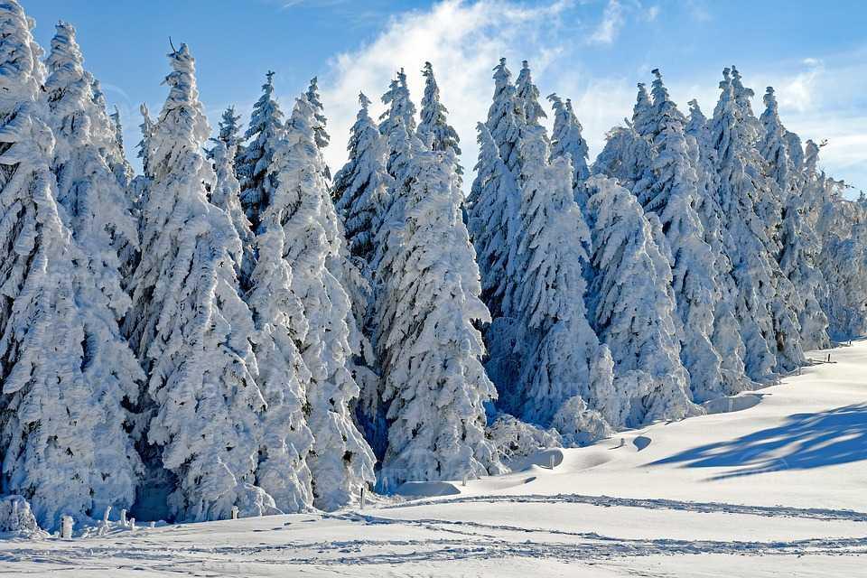 Времето през януари от минус 20 до плюс 15 градуса
