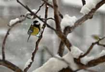 Жълт код за сняг в цяла Северозападна България