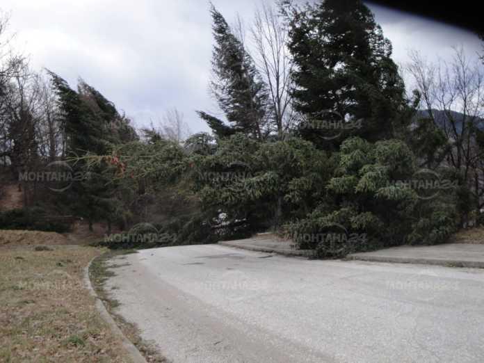 Голям бор препречи движението след село Горно Церовене