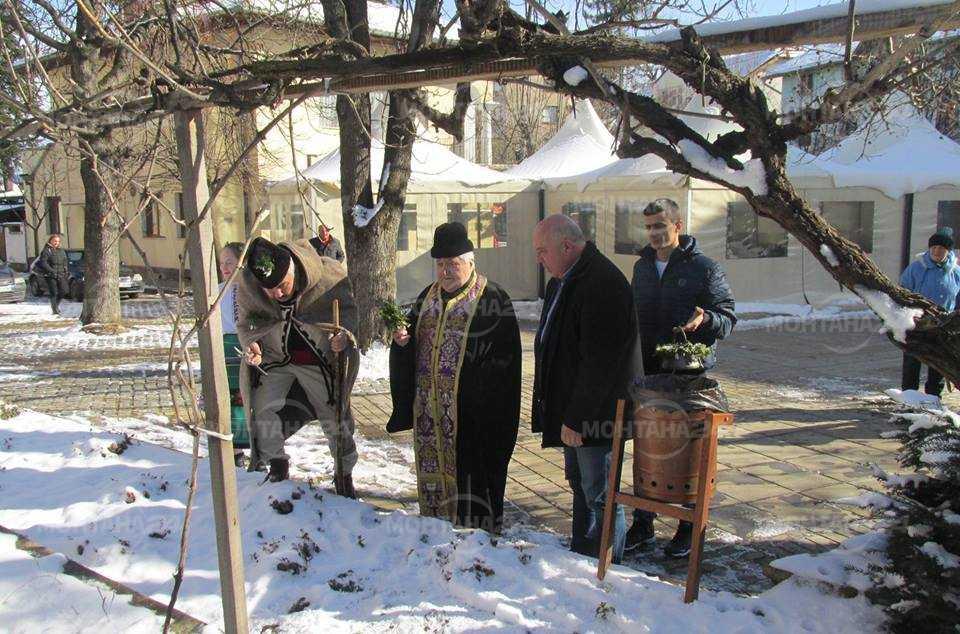 Дядо Янчо заряза лозите пред общината във Вършец