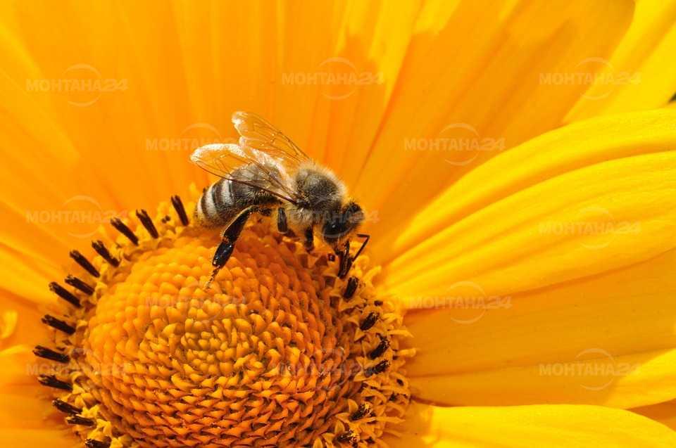 1 900 стопани заявиха участие Национална програма по пчеларство