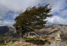 Вижте къде е най-силен вятърът в областта