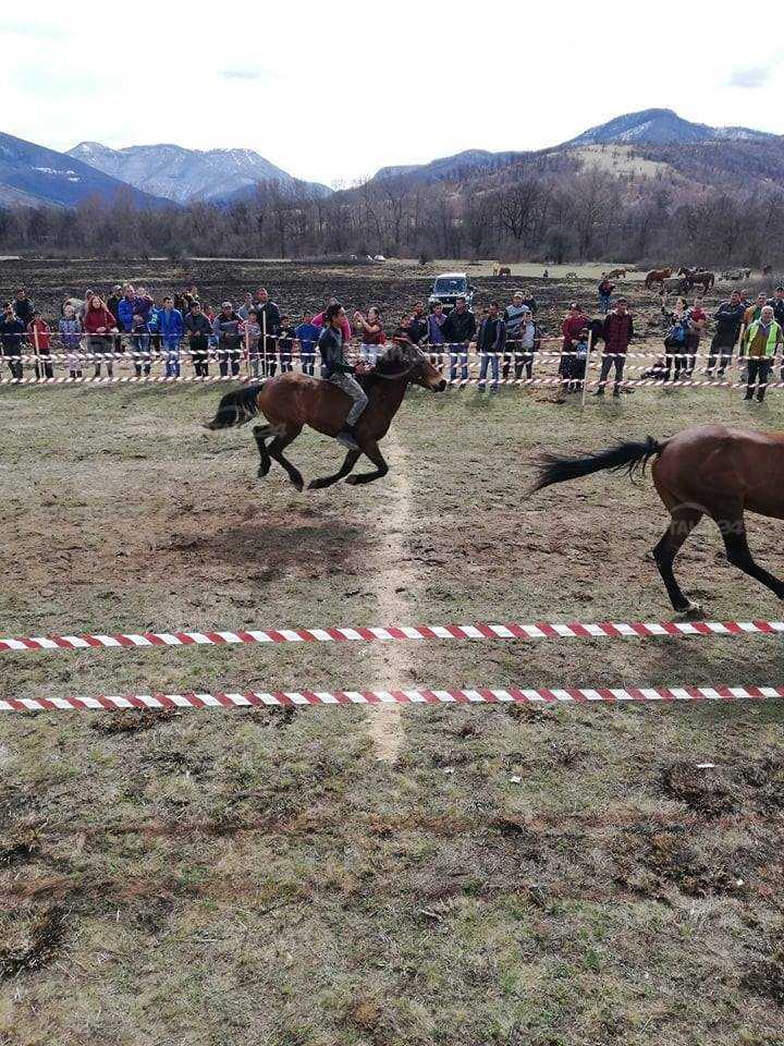 Кон Фигаро взе наградата за най-красив кон във Вършец