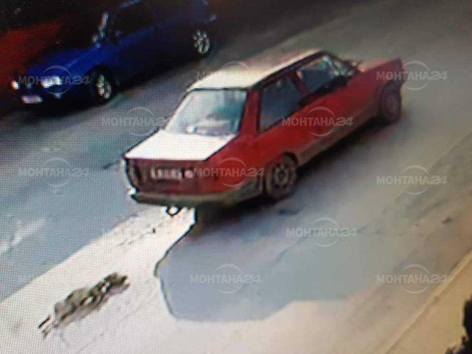 Жестокост! Кола влачи куче из улиците на Монтана
