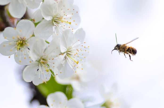 Пролетта отново се задава в региона