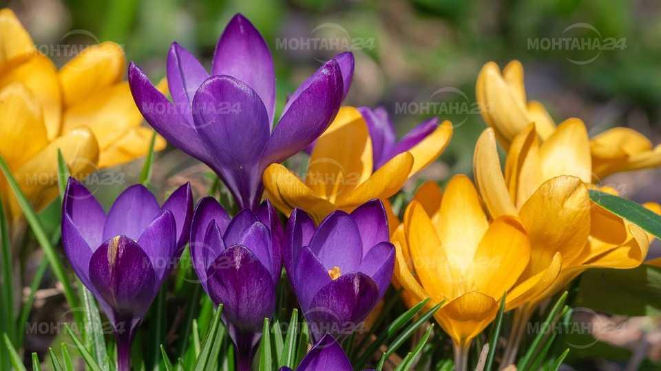 Пролетна вълна завладява новата седмица