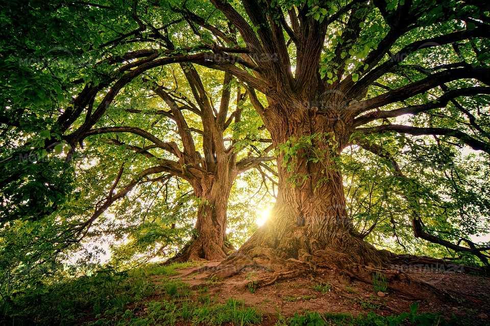 """РИОСВ – Монтана обявява кампания под мотото """"Засади дърво – дишай чист въздух"""""""
