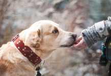 Отровиха домашно куче със салам оцветен в червено