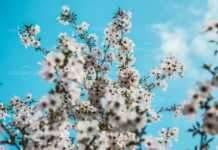Пролетта се завръща в сряда
