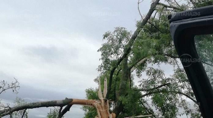 Гръм разцепи дърво край Клисурица