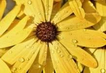 Слънчево до обяд, привечер дъжд
