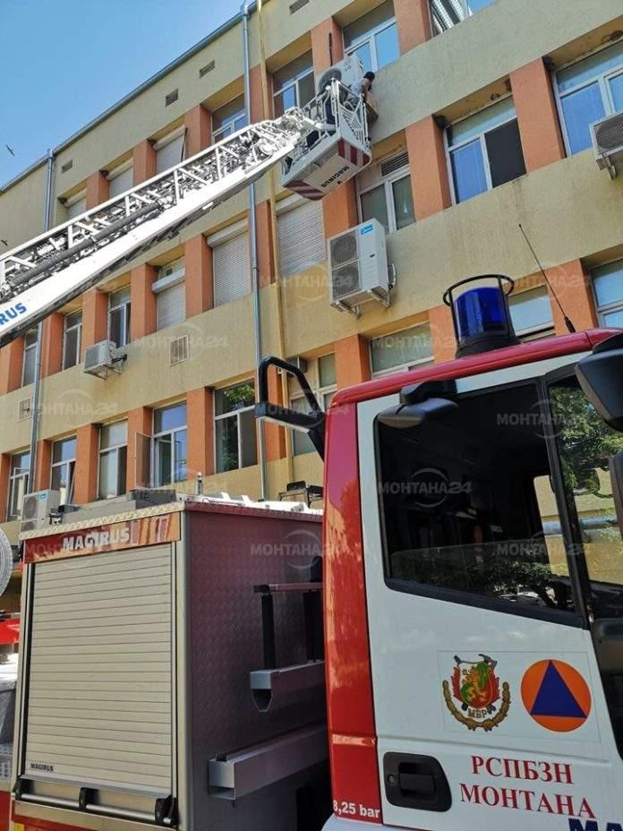 Еколози и пожарникари спасиха лястовици в монтанската болница